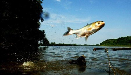 Carp flies to the West