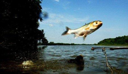 Carp flies to the West